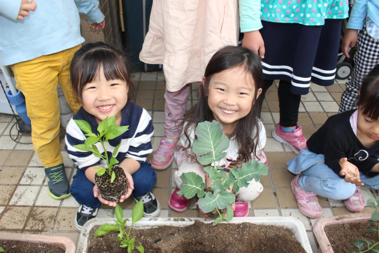 2021年4月中旬 野菜の苗植え